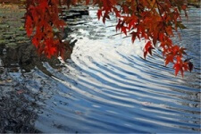 photo ripples on pond